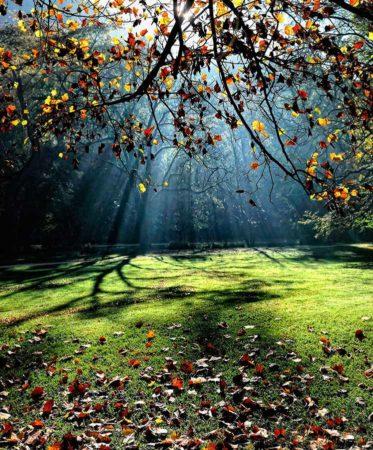 """"""" ... Autumn Leaves ... """""""