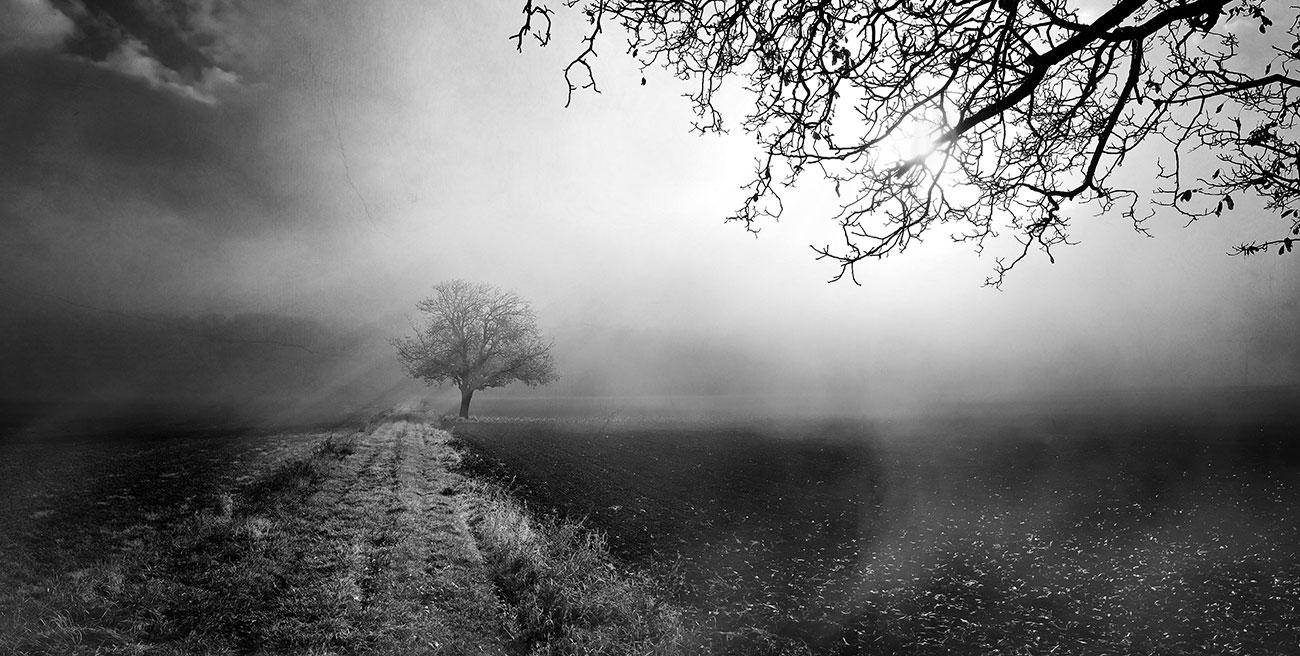 """ ... Beyond The Misty Path ... """