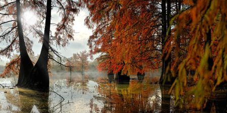 """""""... Ode to Autumn ... """""""