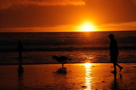 """ ... Walking The Dog ... "" - Carmel by the sea (California)"